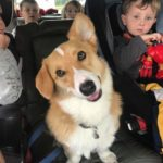 25 Corgi-licious Reasons To Be Happy