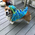 Who's Up for Another Day of Corgis In Cute Costumes?