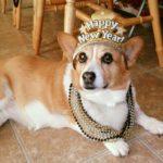 Mama Dog, Luv Bug, Chicken of the Sea: Meet Luna!
