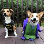 Happy Corgi-ween!