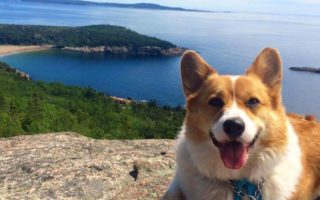 And Corgi Makes Three: Bentley The Bestest!