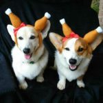 A Week of Giving Thanks: Happy CORGs-giving!