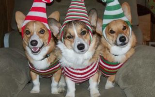 Your Invitation To Corgi On Caringly!