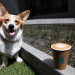 Coffee, Corgis and Comedy Stylings!