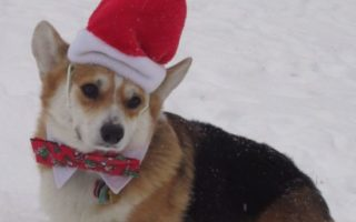 It's A Christmas Corgi Paw-Pourri!