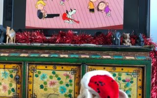Murray The Corgi Watches A Charlie Brown Christmas