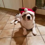 Day 7 of Twelve Big Beautiful Days of Christmas Corgis