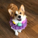 Easter Beasties: Corgis and Company!