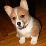 Inaugural Dog's First Birthday!