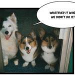 Thrice as nice:  Clover, Farley & Mia