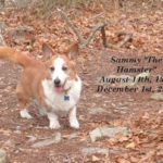 Sammy:  beloved buddy and brother