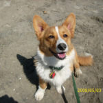 Got the itches for the Corgi britches?