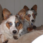 Clyde and Saffir