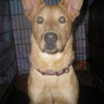 Corgis on Dogster Available for Adoption/Rescue