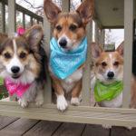 Arabelle, Hanna, and Heidi