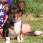 Cardi Myko looking for a forever home …
