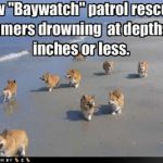 Corgyn Beach Patrol