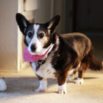Dottie:  A Good Life Remembered