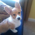 Puppy Cam:  Gracie!