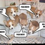 Pupper Upper:  pick me!