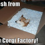 Corgi LOL!