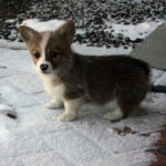 Puppy Cam:  Herbie Girl!
