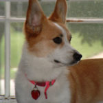 Let's rally for Penni in the Pet Idol Finals!