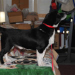 Can you help get rescued Frankie to his new home for XMAS?