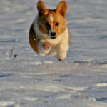 Action Cam:  Jozi!