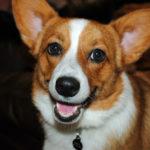 Saturday Smiler:  Molly!