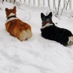 Butt Cam:  Snow Patrol!