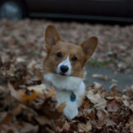 Funny Face:  Cors and the leaves.