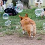 Bubbles and nub!