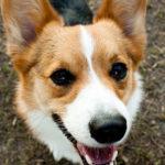 Saturday Smiler:  Basil!