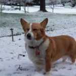Snow happy:  Brandi!