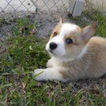 Puppy Cam:  Clyde Barrows Flynn the Furst!