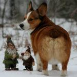 Gnome Cam!