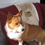 Blog Dog Cameo:  Emma!