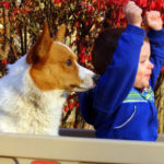 Kids n' Corgis Cam:  Malachi and Abraham!