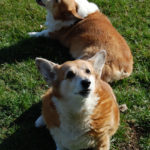 Faces of DM:  Cleo and Tasha