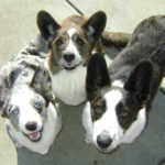 Crystal, Frodo and Cooper of California