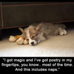 The poetry of the nap.