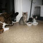 Corgis n' Cats Cam!