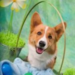 It's the Easter Corgi, Charlie Brown!