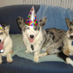 Birthday Cam:  Saiorse!