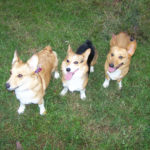 Ginger, Gabby, Griffin and Theo of Tennessee