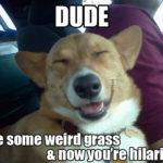 LOL Cam!