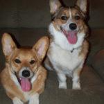 Saturday Smilers:  Hudson and Brodie!