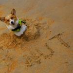 Beach Cam:  Peanut Butter!