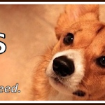 Hero for Corgis:  Paige Davis!